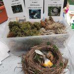 Birdnest and basket of moss